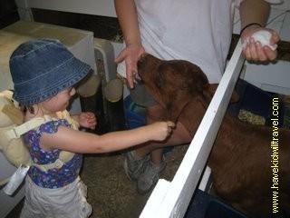 petting zoo, Iowa State Fair, Iowa, Iowa attractions