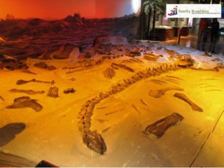 "Dinosaurs Unearthed ""dinosaur dig"""
