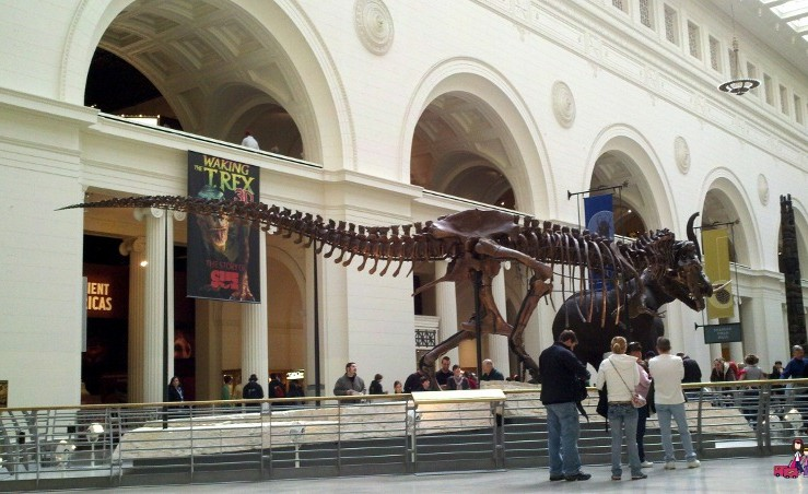 Things I Wish I had Known Before Visiting the Field Museum