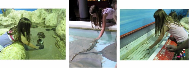 Touch Tanks at Oklahoma Aquarium