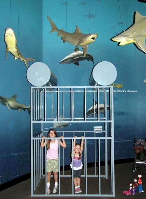 Shark Tank Oklahoma Aquarium