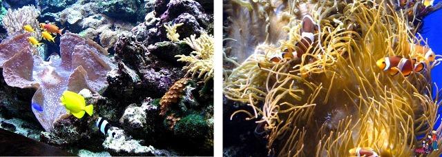 Colorful Reef Fish Oklahoma Aquarium