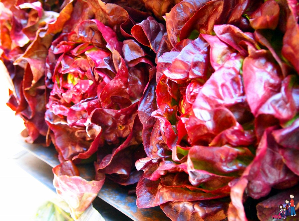 Red Leaf Lettuce at The Farm Stand at Agritopia