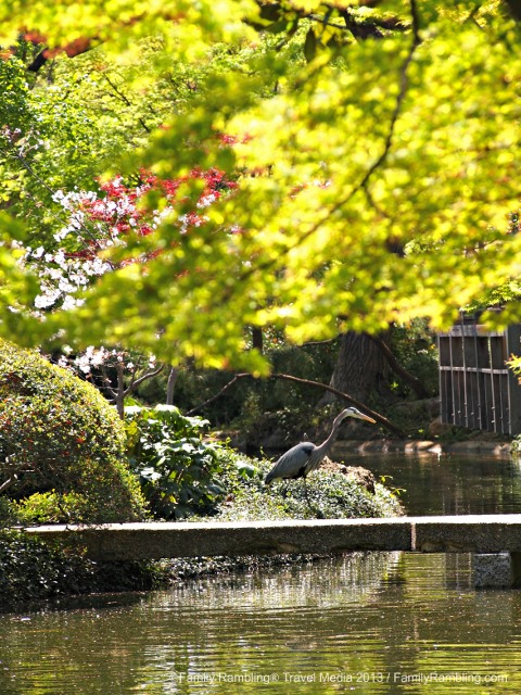 The Japanese Garden in Fort Worth