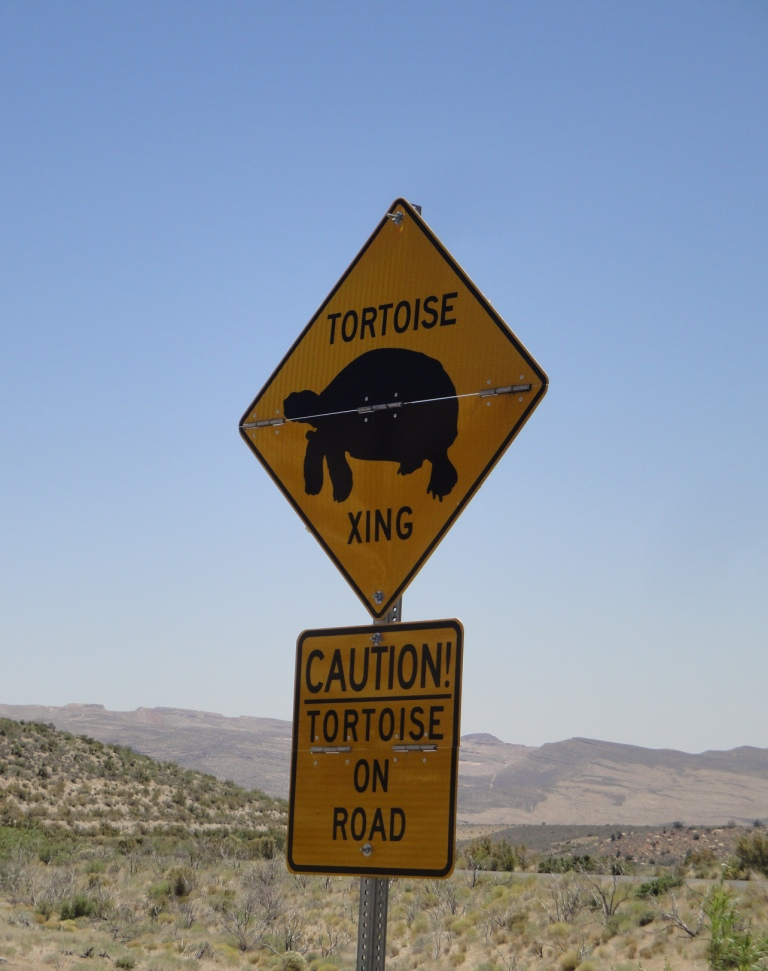 tortoise sign, Red Rock Canyon, NV