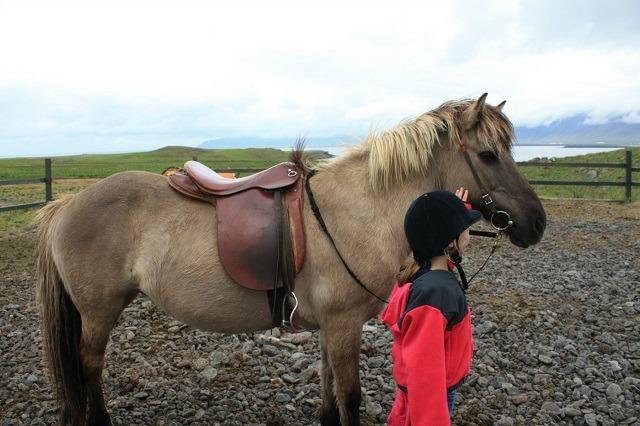 Iceland Vacation, Icelandic Horses