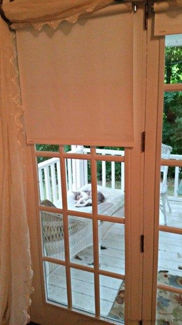 Friendly farm cat at Natural Valley Ranch; Indianapolis vacation home