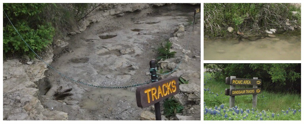 Dinosaur tracks, and a not-so-friendly snake at Dinosaur Valley State Park near Glen Rose, Texas.