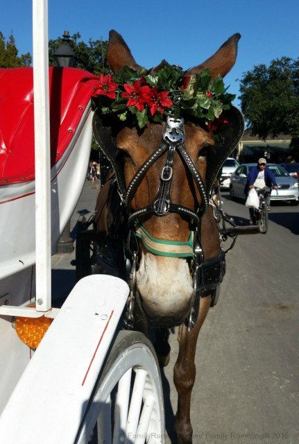 Festive mule in the French Quarter, New Orleans. New Orleans Christmas travel tips.