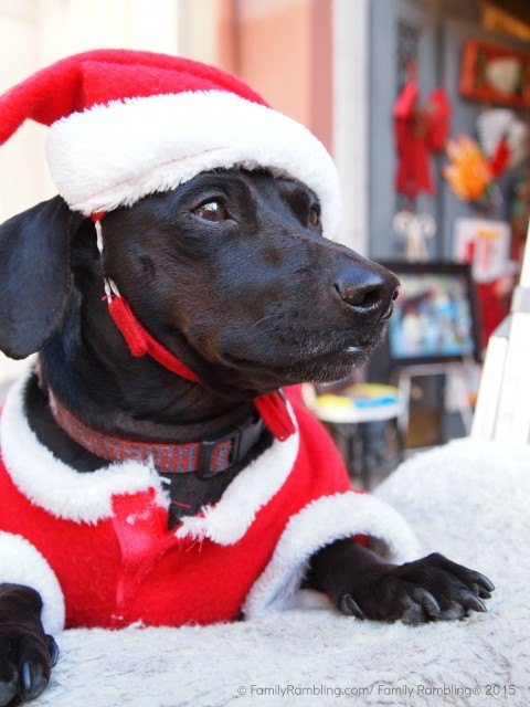 Santa Paws. New Orleans Christmas travel tips.