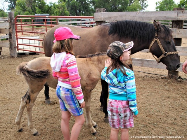 Meet Spanish Mustangs at Windcross Conservancy near Hot Springs, South Dakota. Awesome animal adventures | fun family travel | Jody Halsted/ FamilyRambling.com