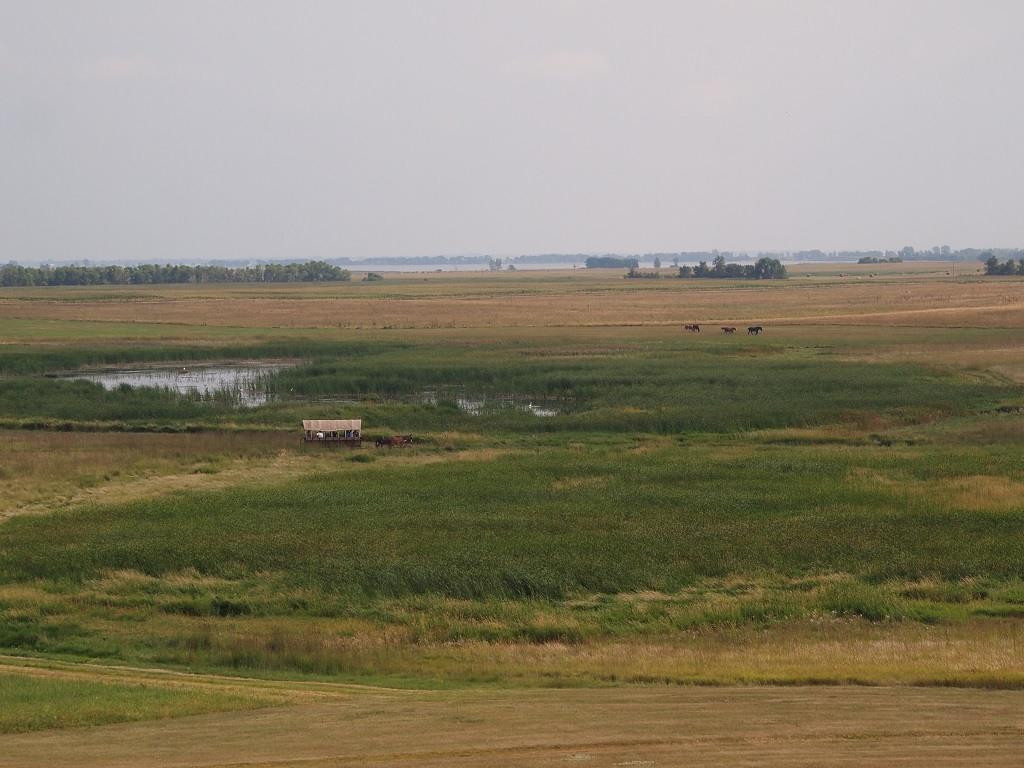 covered wagon, Ingalls Homestead, DeSmet, South Dakota