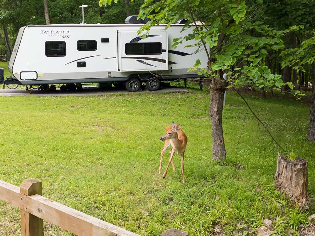 deer_ Lake of the Ozarks State Park campground _ Missouri