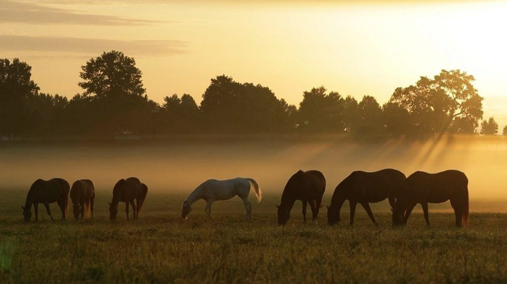 horses graze at Gainsway Farm in Kentucky