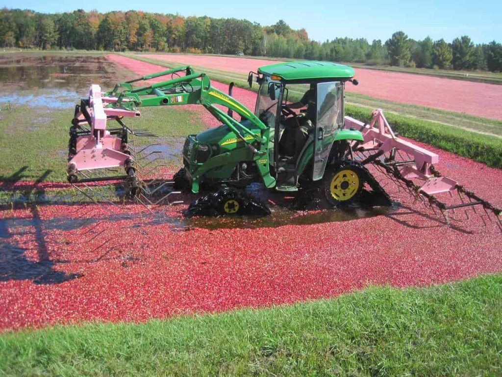 cranberry_harvest_rake_Wisconsin_Cranberry_Highway