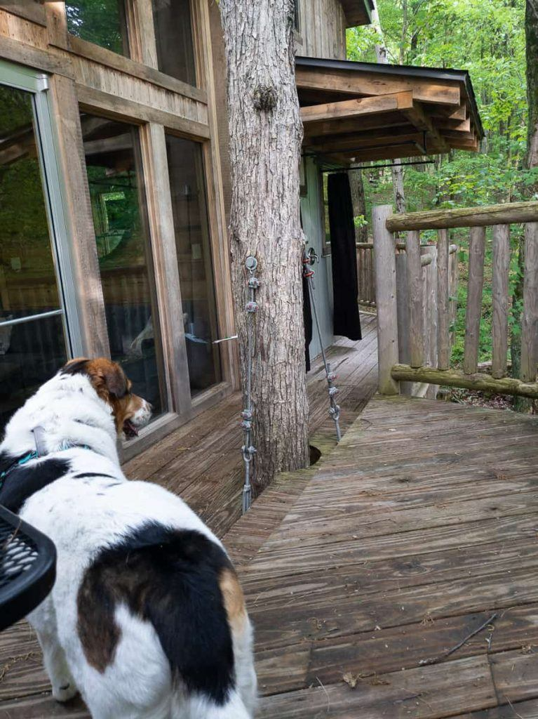 pet_friendly_treehouse_glamping_the_mohicans_ohio