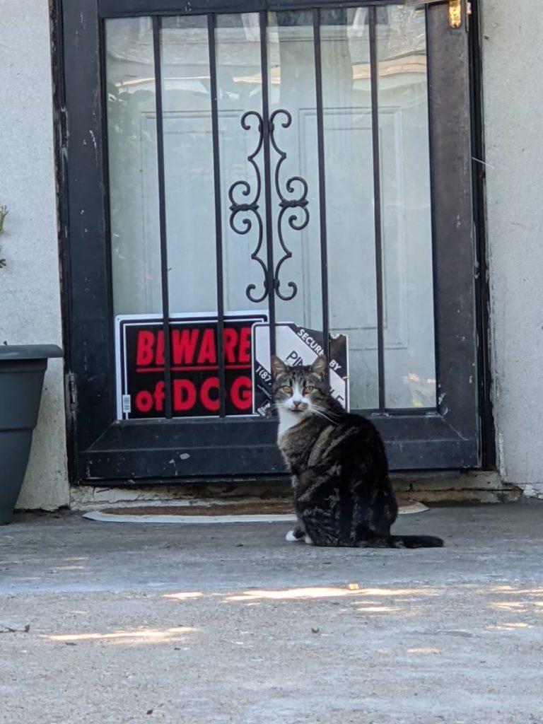 cat_beware_of_dog_photo_credit_Jody_Halsted